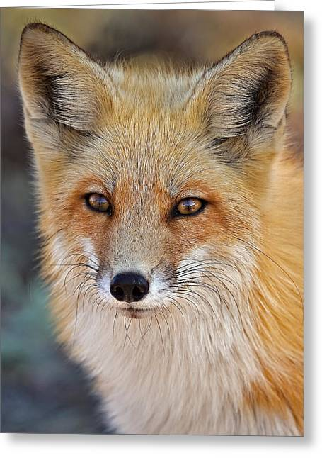 Foxes Greeting Cards - Foxy Greeting Card by Susan Candelario
