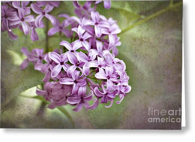 Fragrant Purple Lilac Greeting Card by Cheryl Davis