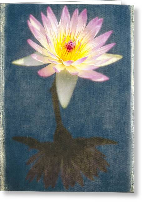 Nymphaea Greeting Cards - Fragrant Water Lily with Reflections Greeting Card by George Oze
