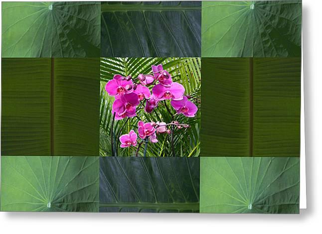 John Neville Cohen Greeting Cards - Framed Orchids Card Greeting Card by John Neville Cohen