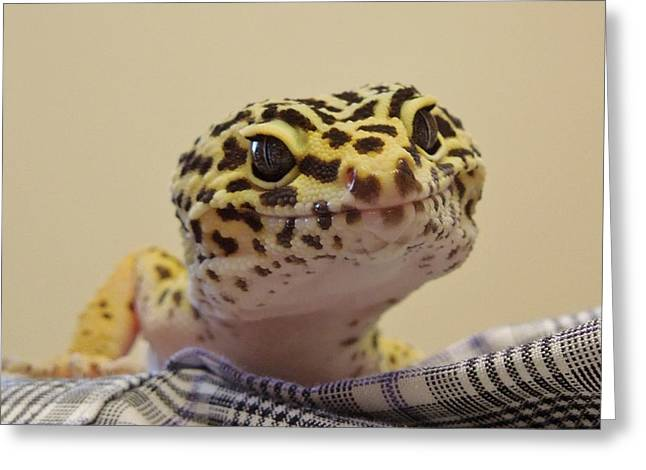 Gecko Print Greeting Cards - Freckles The Smiling Leopard Gecko Greeting Card by Chad and Stacey Hall