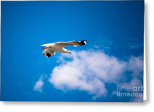 Ecology Greeting Cards - Free a  bird Greeting Card by John Buxton