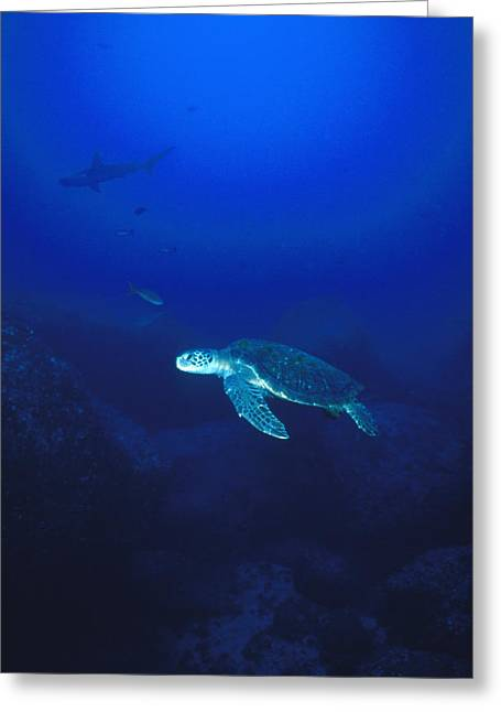 Costa Greeting Cards - Free Swimming Green Sea Turtle Greeting Card by James Forte