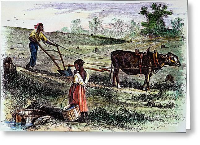 Sharecropper Greeting Cards - Freedmans Farm, 1866 Greeting Card by Granger