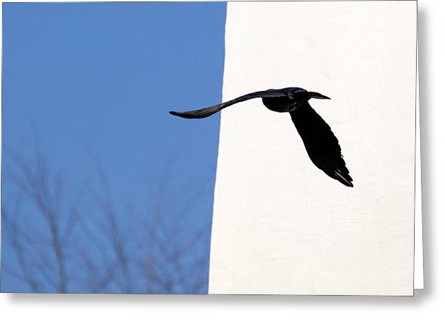 Crows Framed Prints Greeting Cards - Freedom-loving Freiheitsliebend Greeting Card by H a r a l d B e r t l i n g