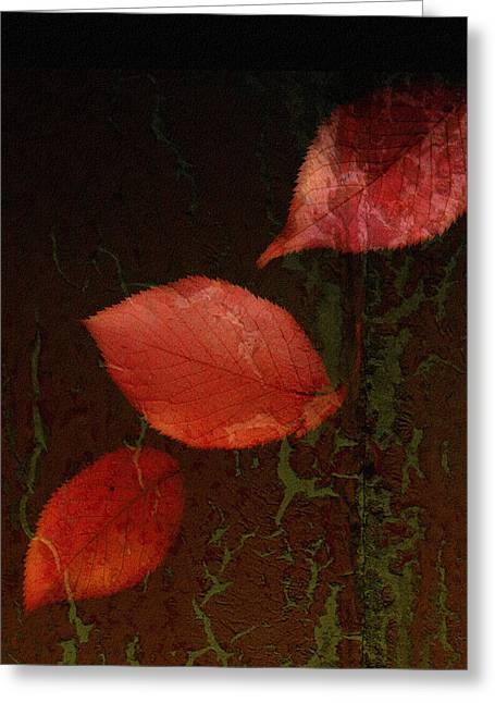 Olive Green Greeting Cards - Freefall Greeting Card by Bonnie Bruno