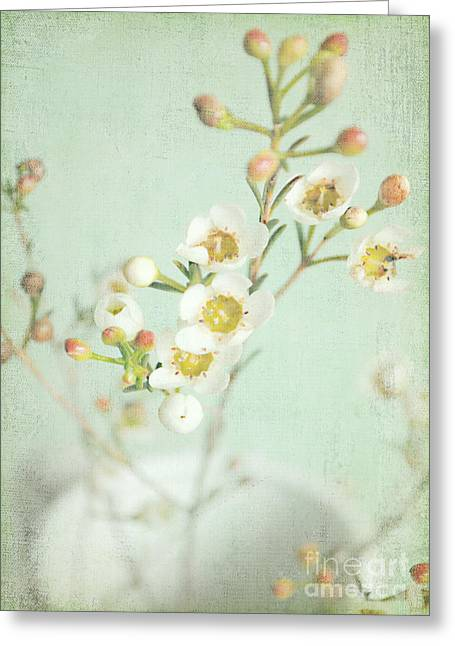 Interior Still Life Greeting Cards - Freesia Blossom Greeting Card by Lyn Randle