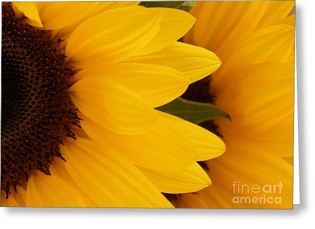 Lainie Wrightson Greeting Cards - French Sunflowers Greeting Card by Lainie Wrightson