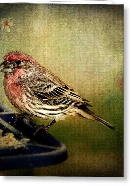Bird-feeder Greeting Cards - Frequent Visitor Greeting Card by Kathy Jennings
