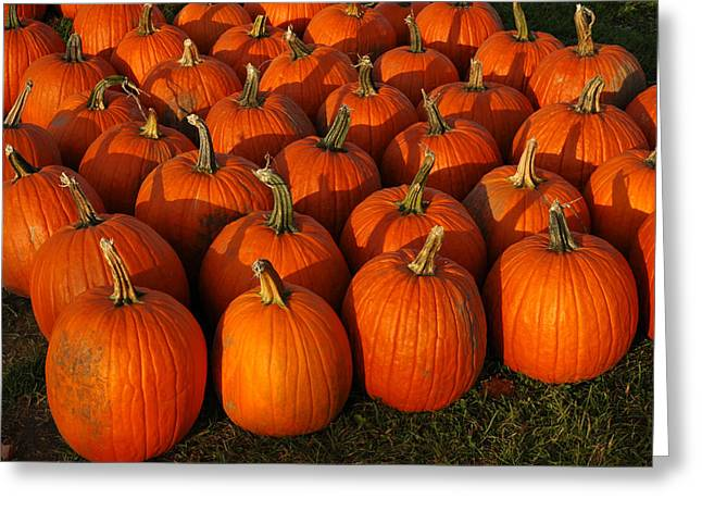 Vegetables Greeting Cards - Fresh from the Farm Orange Pumpkins Greeting Card by LeeAnn McLaneGoetz McLaneGoetzStudioLLCcom