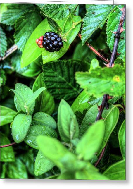 Black Berries Greeting Cards - Fresh  Greeting Card by JC Findley