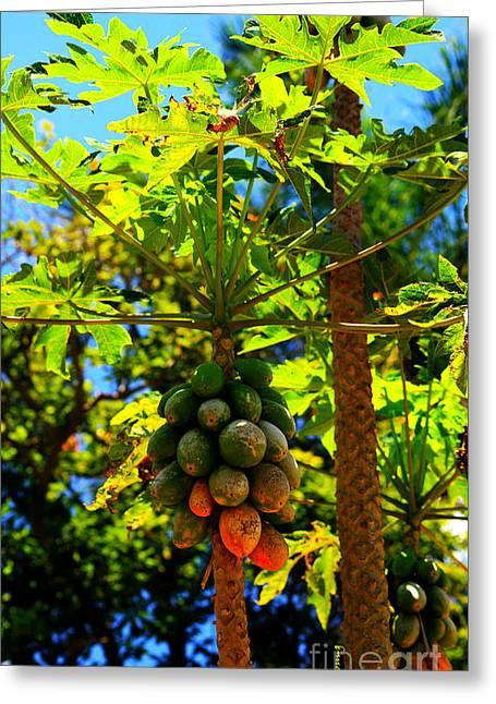 Papayas Greeting Cards - Fresh Papaya Greeting Card by Cheryl Young
