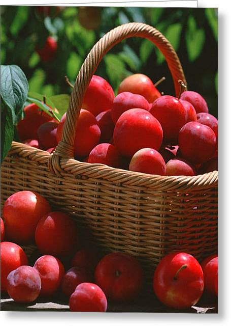 Organic Greeting Cards - Fresh Red Plums In The Basket Greeting Card by Lanjee Chee