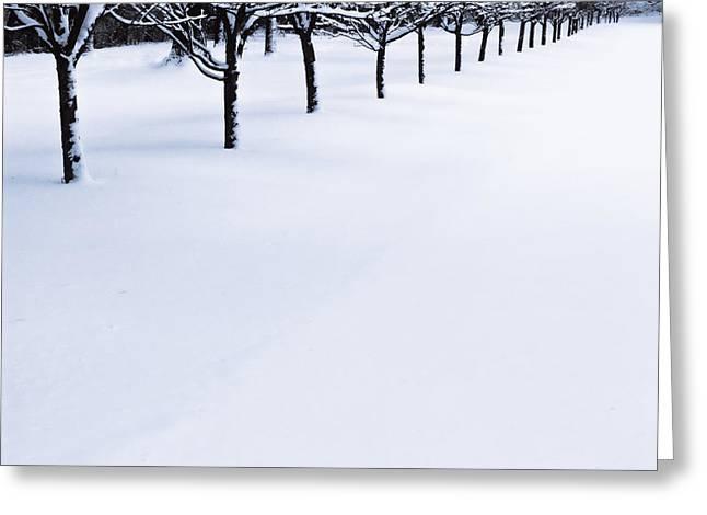 Winter Park Greeting Cards - Fresh Snow Greeting Card by John Hansen