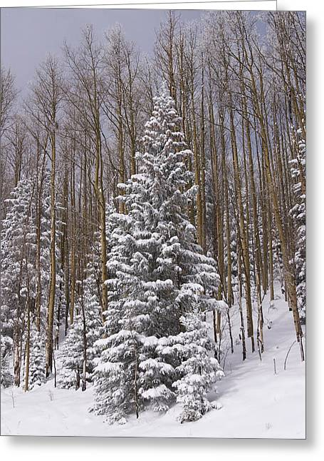 Sangre De Cristo Mountains Greeting Cards - Fresh Snow Tops The Trees In Santa Fe Greeting Card by Ralph Lee Hopkins