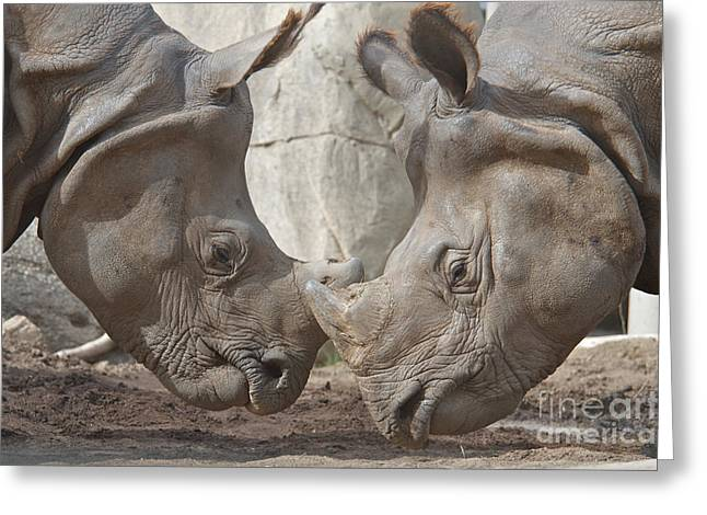 One Horned Rhino Greeting Cards - Friend or Foe Greeting Card by Jason Waugh