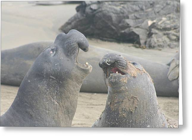 Best Sellers -  - Elephant Seals Greeting Cards - Friends Greeting Card by Amy Holmes