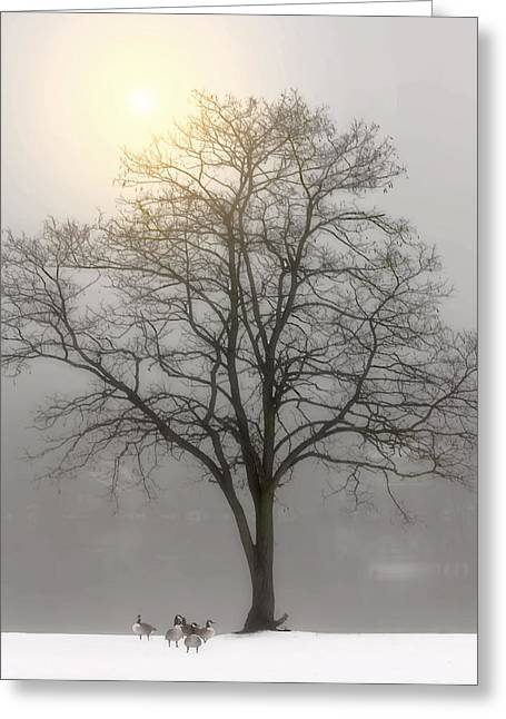 Snow Tree Prints Greeting Cards - Friends Greeting Card by Tom York Images