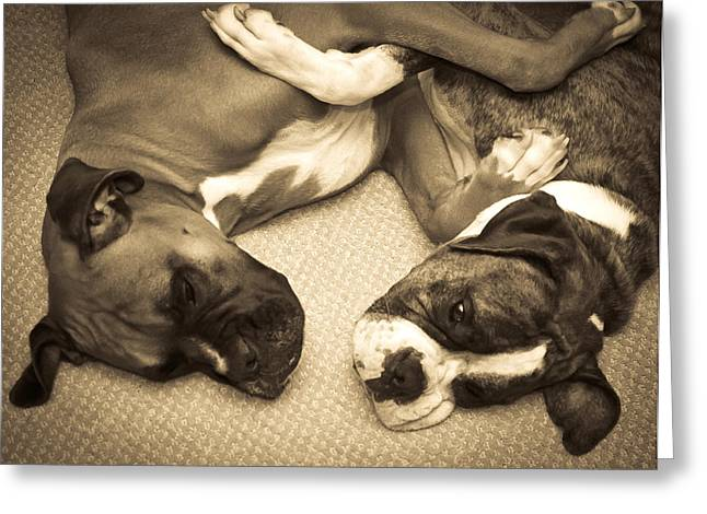 Boxer Greeting Cards - Friendship Embrace Greeting Card by DigiArt Diaries by Vicky B Fuller