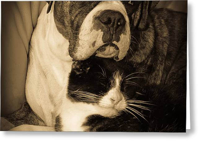 Friendship is the Greatest Gift of All Greeting Greeting Card by DigiArt Diaries by Vicky B Fuller