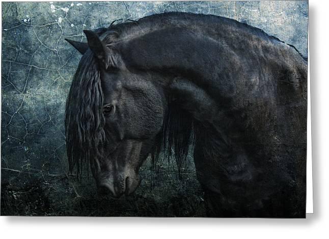 Frisian stallion Greeting Card by Joachim G Pinkawa