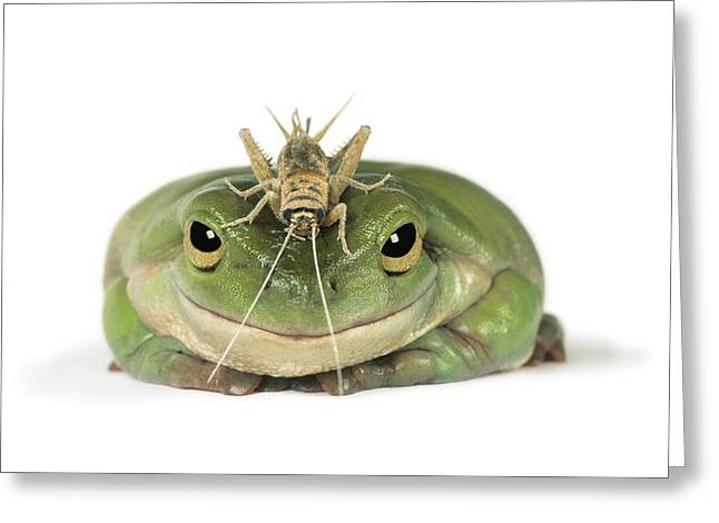 Frog And Grasshopper Greeting Card by Darwin Wiggett