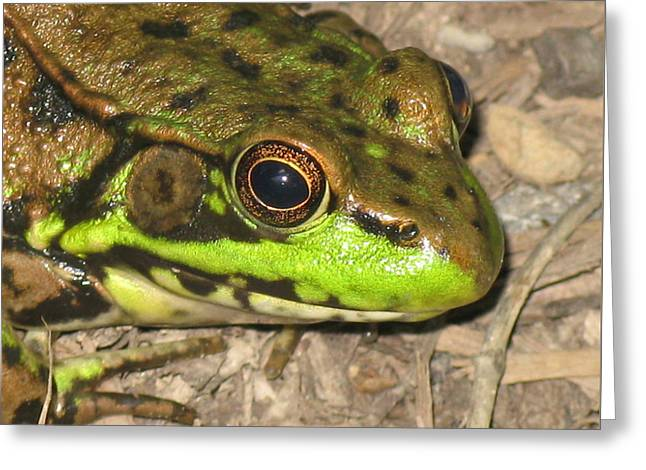 Frog Greeting Card by Debbie Finley