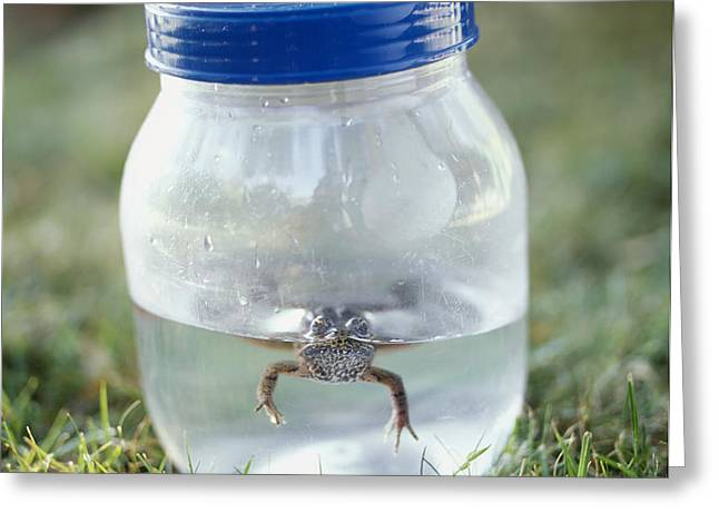 Frog in a Jar Greeting Card by Adam Crowley