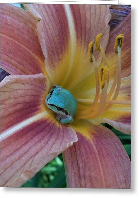 Day Lilly Drawings Greeting Cards - Frog in the Day Lilly Greeting Card by Jeremiah Colley