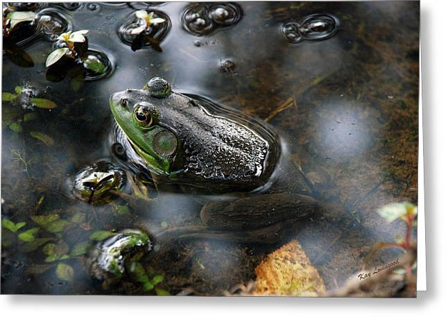 Kay Lovingood Greeting Cards - Frog in the Millpond Greeting Card by Kay Lovingood