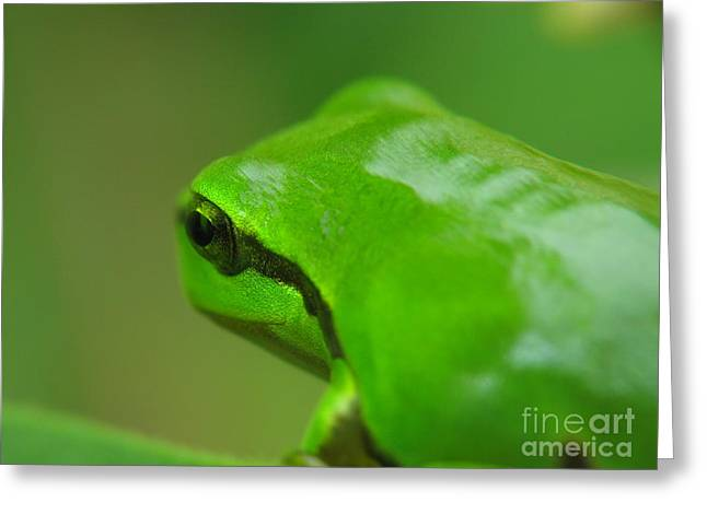 Sweating Photographs Greeting Cards - Frog Greeting Card by Odon Czintos