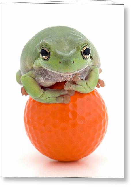 Treefrog Greeting Cards - Frog On A Golf Ball Greeting Card by Corey Hochachka