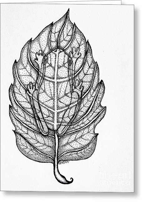 Amphibians Drawings Greeting Cards - Frog on a leaf Greeting Card by Nick Gustafson