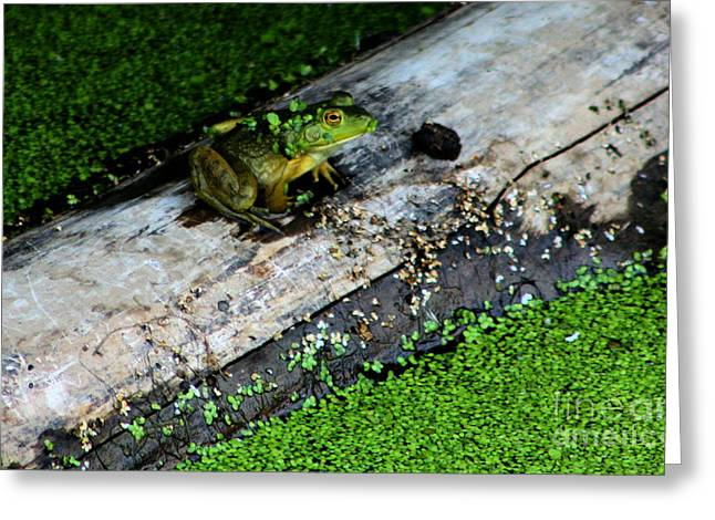 Frogs Photographs Greeting Cards - Frog on a Log Greeting Card by Nick Gustafson