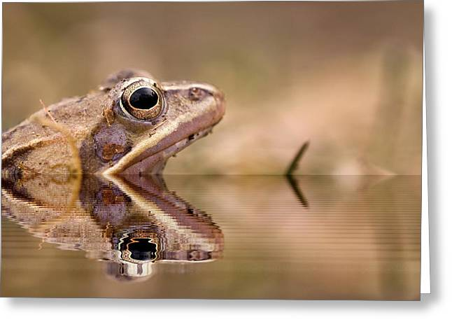 Gecko Illustration Greeting Cards - Frog reflection Greeting Card by Odon Czintos