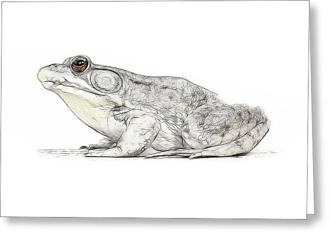 Tilly Art Greeting Cards - Frog Greeting Card by Tilly Williams