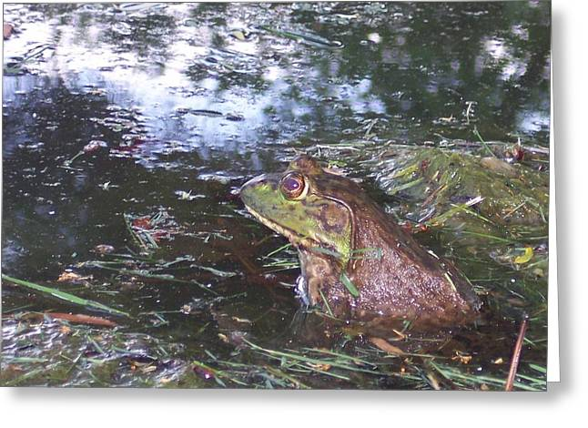 Anna Villarreal Garbis Greeting Cards - Froggie II Greeting Card by Anna Villarreal Garbis