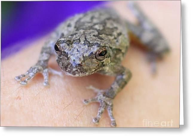 Krista Greeting Cards - Froggie on My Arm Greeting Card by Krista Kulas