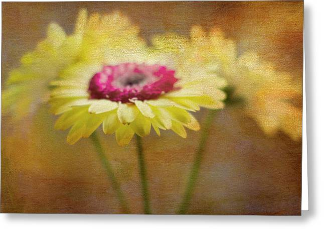 Texture Flower Greeting Cards - Front and Center Greeting Card by Rebecca Cozart
