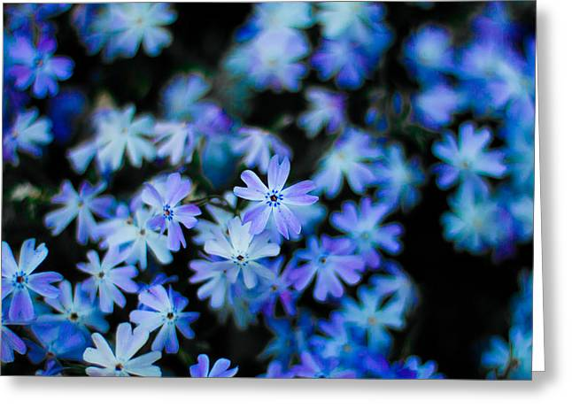 Front Yard Greeting Cards - Front Yard Explorations Colour Blue Greeting Card by Jakub Sisak