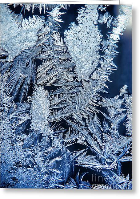 Ice Crystals Greeting Cards - Frost Greeting Card by HD Connelly