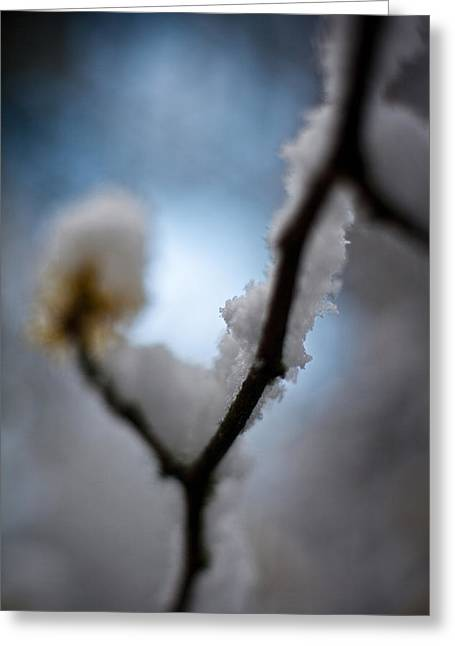 Frost Light Greeting Card by Mike Reid