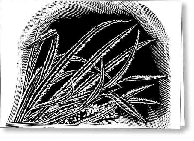 Linocut Photographs Greeting Cards - Frost On Blades Of Grass, Woodcut Greeting Card by Gary Hincks