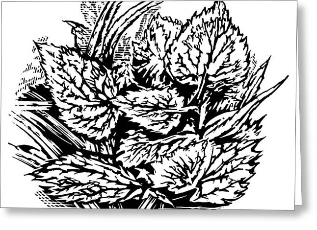 Linocut Greeting Cards - Frost On Leaves, Woodcut Greeting Card by Gary Hincks