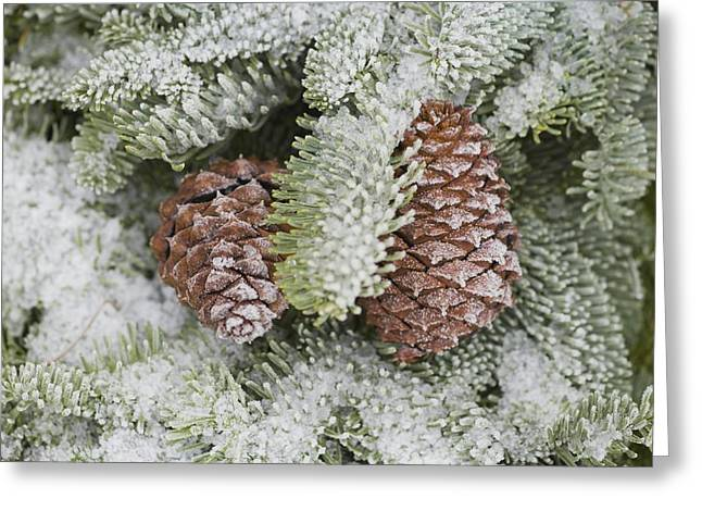 Pine Cones Greeting Cards - Frost On Pine Cones Greeting Card by Craig Tuttle