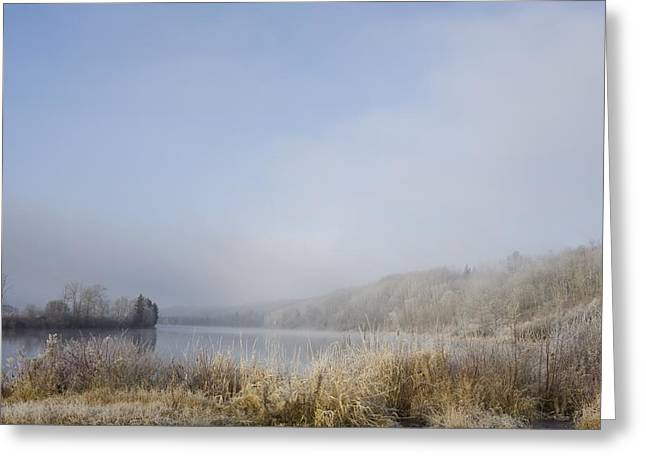 Foggy Day Greeting Cards - Frost On The Tall Grass Along The Shore Greeting Card by Susan Dykstra