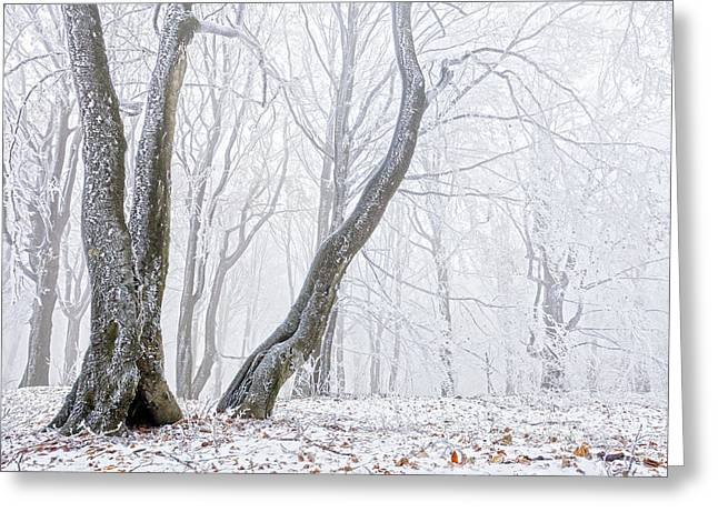 Balkan Greeting Cards - Frostbitten Forest Greeting Card by Evgeni Dinev