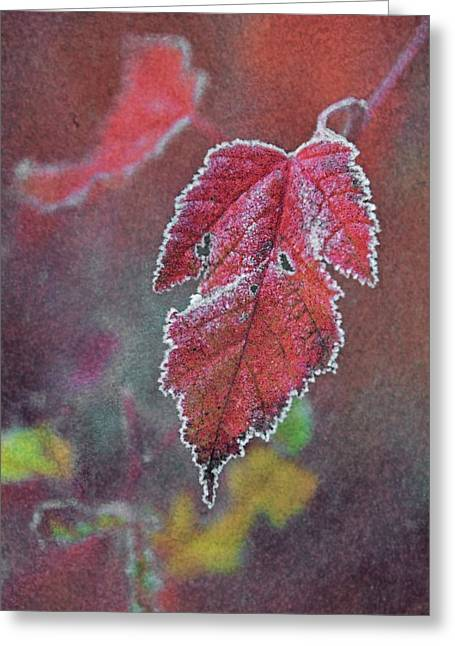 Red Leaves Greeting Cards - Frosted Greeting Card by Odd Jeppesen