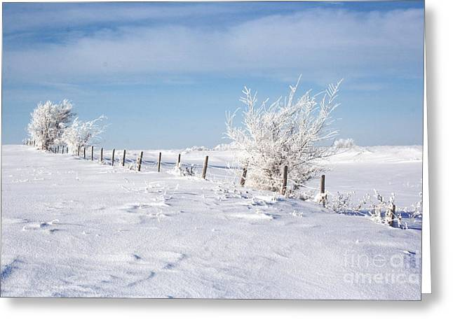 Snowy Day Greeting Cards - Frosty Day Greeting Card by Julie Lueders
