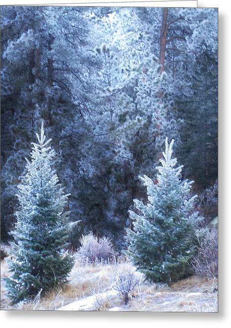 Luminist Greeting Cards - Frosty Firs Greeting Card by Ric Soulen